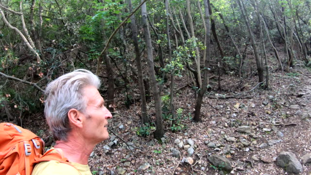 vidéos et rushes de randonneur mâle monte le sentier à travers la forêt de feuillus feuillus - un seul homme d'âge mûr
