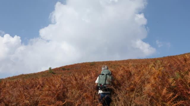 vídeos de stock, filmes e b-roll de alpinista masculina entra pela floresta de samambaia em alpino - camiseta preta