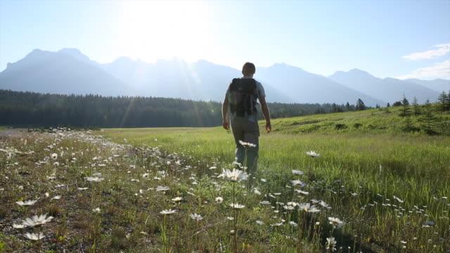 vídeos y material grabado en eventos de stock de el excursionista masculino camina por el prado al amanecer - flor silvestre