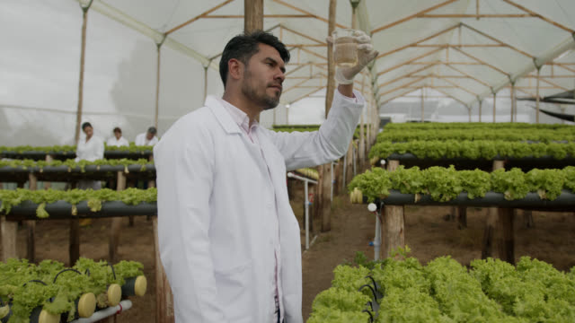 Male horticulturalist looking at a sample in beaker at a lettuce harvest greenhouse