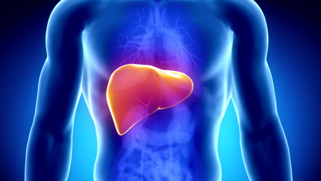 Royalty Free Human Liver Hd Video 4k Stock Footage B Roll Istock