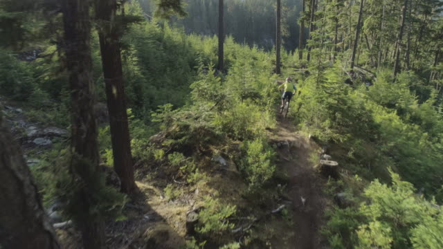 male mountain biking in whister lush forest. - andare in mountain bike video stock e b–roll