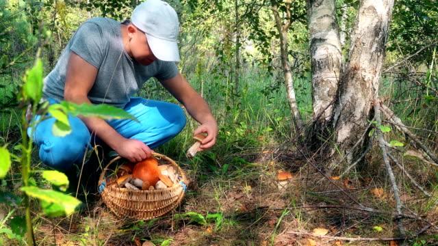 manliga svamp plockare plocka svamp och sätta dem till full korg - höst plocka svamp bildbanksvideor och videomaterial från bakom kulisserna