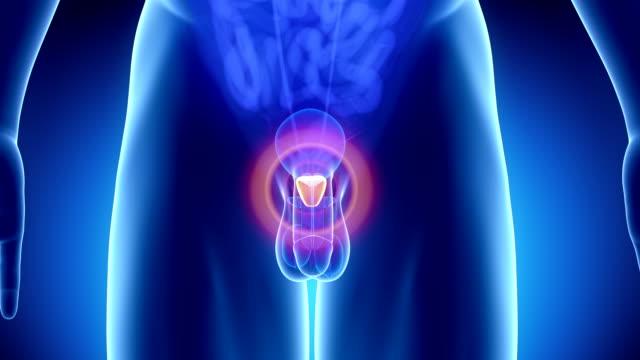 male prostate problem - penis stok videoları ve detay görüntü çekimi