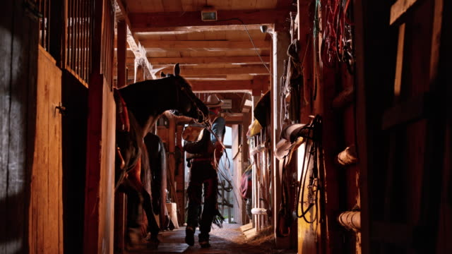 DS Male rancher leading his horse out of stable Medium rear view dolly shot of a male rancher leading his horse out of the stable in sunshine. barns stock videos & royalty-free footage