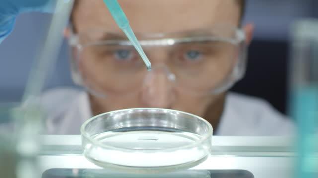 細胞コロニーを分析する男性研究者 - 研究所点の映像素材/bロール
