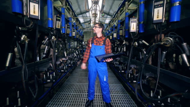 male specialist is checking and regulating milking machines - молочный продукт стоковые видео и кадры b-roll