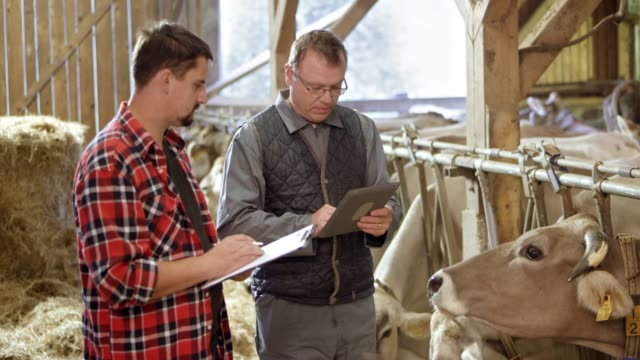 Male veterinarian advising a male farmer about the cattle feed as they stand in the barn video