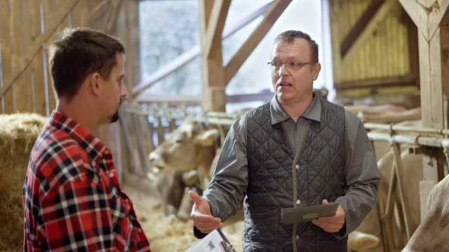 Male veterinarian talking to the young male farmer in the barn standing next to the cattle video