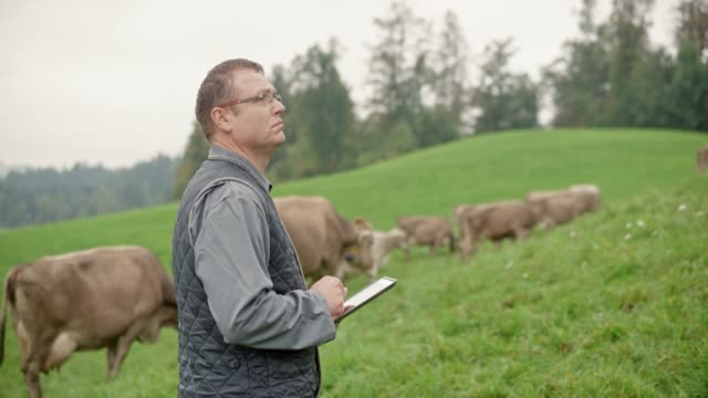 Male veterinarian using a tablet to make notes while observing the cattle in the pasture video