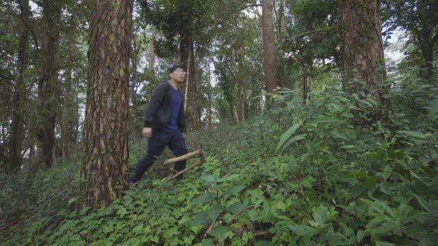 Male walking, hiking, photograping in pine forest. video