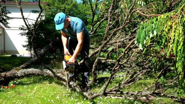 männlicher arbeiter mit kettensäge und geschnittenen ästen von dekorativen baum fallen um. gimbal - ast pflanzenbestandteil stock-videos und b-roll-filmmaterial