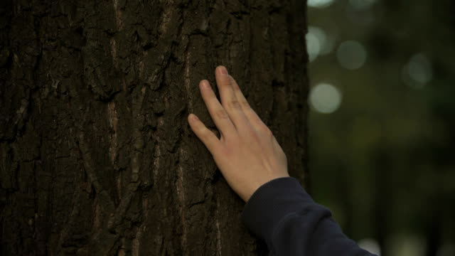 males hand touching tree trunk, loving nature, environmental protection and care - family trees stock videos and b-roll footage