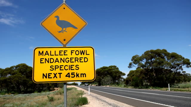 Mallee Fowl Sign HD video