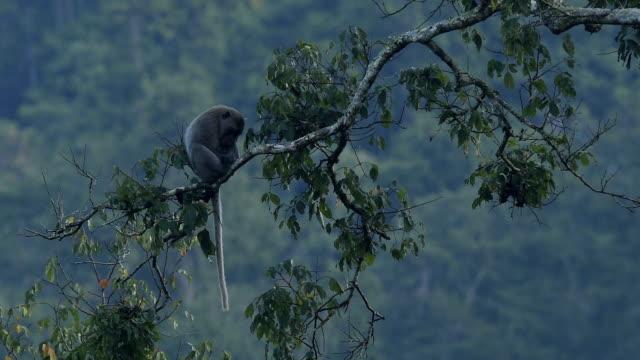 Mammals wildlife video