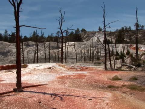 ntsc: mammoth hot springs - wide - utdöd bildbanksvideor och videomaterial från bakom kulisserna
