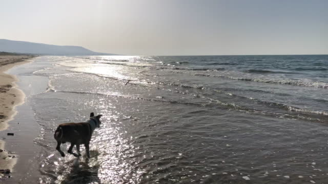 MS POV Man and dog playing fetch on sunny sea beach, Apulia, Italy