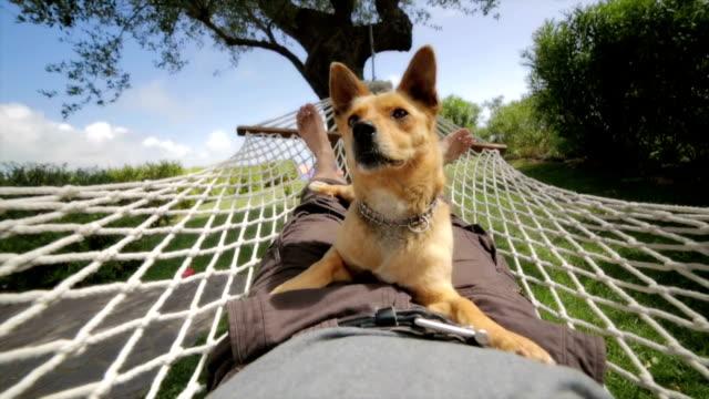 uomo e cane rilassante in amaca. rallentatore. - altalena video stock e b–roll