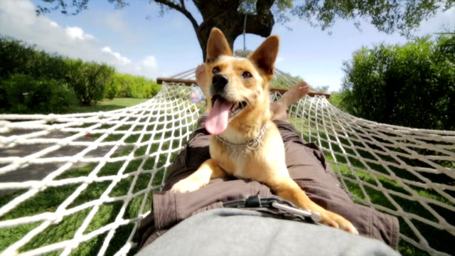 Man and dog relaxing on the hammock video