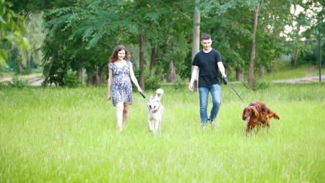 Man and woman - family couple with pets dogs walking in park - irish setter and husky Man and woman - family couple with pets dogs walking in park - irish setter and husky, telephoto shot setter dog stock videos & royalty-free footage