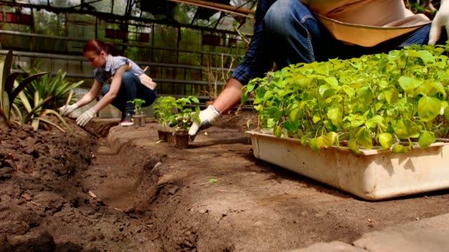 man och kvinna trädgårdsmästare sorterar plantor innan plantering i öppen mark i växthus. - liten bildbanksvideor och videomaterial från bakom kulisserna