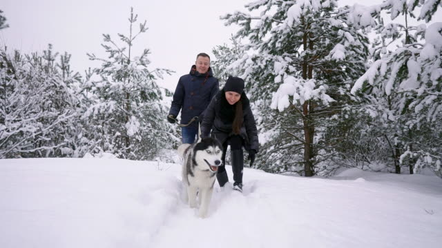 man and woman have fun walking with siberian husky in winter forest playing and throwing snow in slow motion - cane husky video stock e b–roll