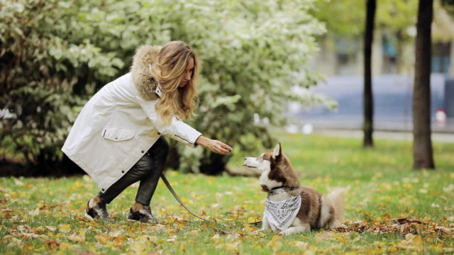 Man and woman playing with a dog husky in park at the autumn day, slow motion, she teasing her keep feed video