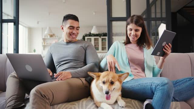 man och kvinna surfa internet strök corgi hund på soffa - flickvän bildbanksvideor och videomaterial från bakom kulisserna