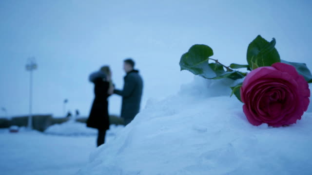 Man and woman swear on background of roses in snowdrift video