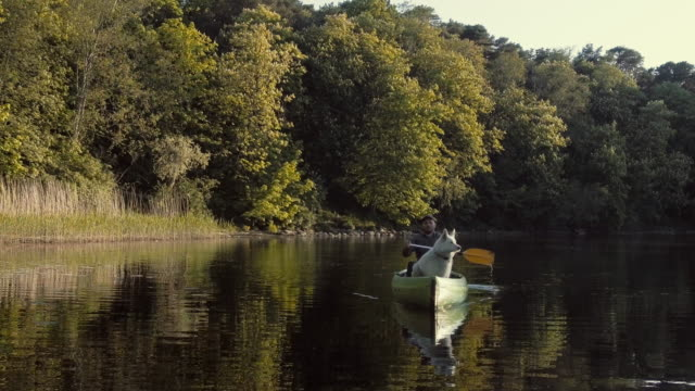 vídeos de stock e filmes b-roll de man canoeing on a river with a dog - samoiedo