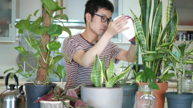 man caring for his indoor plants - aloe vera стоковые видео и кадры b-roll