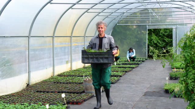 Man carrying plants in a crate in greenhouse Slow motion shot of man carrying plants in a crate in greenhouse with females working in background. ground culinary stock videos & royalty-free footage