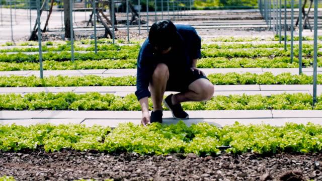 男の温室の植物をチェック - ローフード点の映像素材/bロール