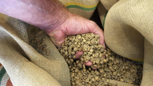 mann überprüft die qualität von rohkaffeebohnen - rohe kaffeebohne stock-videos und b-roll-filmmaterial