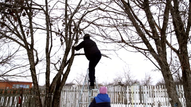 A man climbs the ladders on the apple tree video