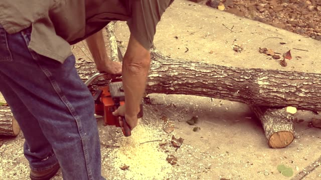 Man cuts down tree then saws it up into fireplace logs. video