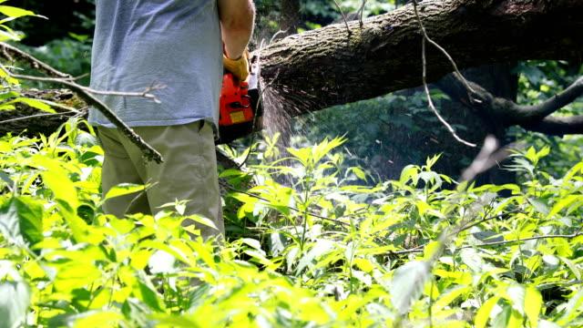l'uomo che taglia gli alberi - motosega video stock e b–roll