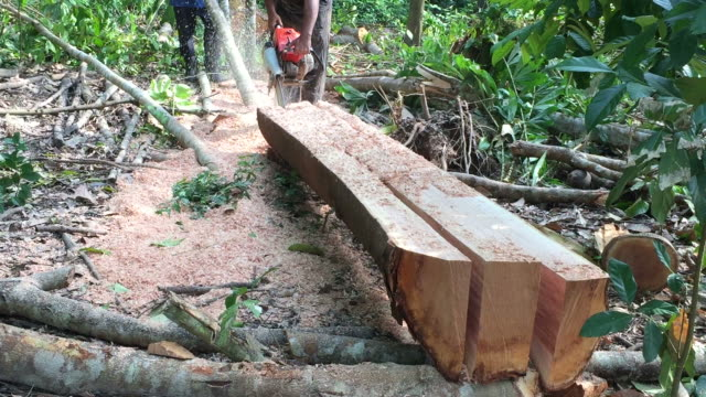 Man cutting through log wood video