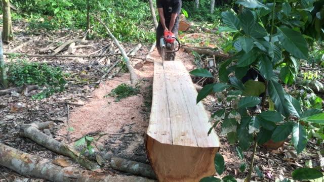 Man cutting through log wood video