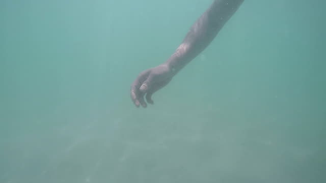 man diving into the water to look at starfish underwater on a sandy seabed, natural light, caribbean sea, inspirational, happy, impressions, active travel tourism - immerse in the stars video stock e b–roll