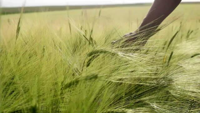 Man enjoying in wheat field.