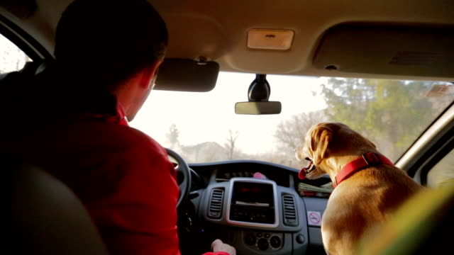 A man enjoys the ride home as much as his dog does! video