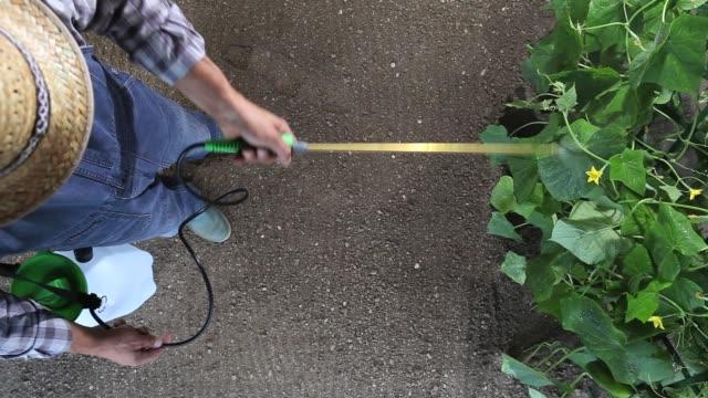 vidéos et rushes de agriculteur homme travaillant dans le jardin potager, des pulvérisations de pesticides sur les plantes, vue de dessus et de copier le modèle espace - herbicide