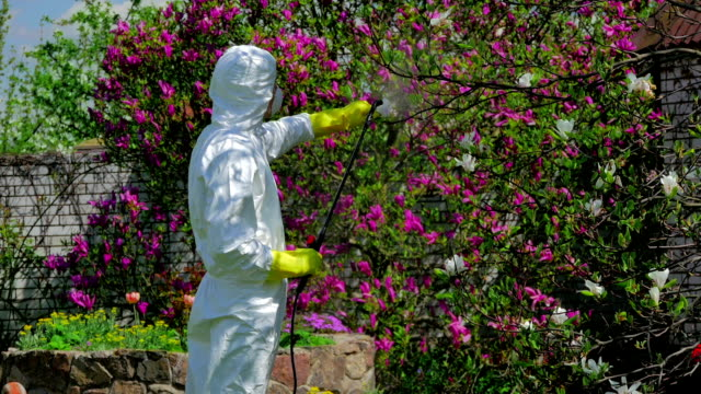 Man fertilizing the blossom tree video