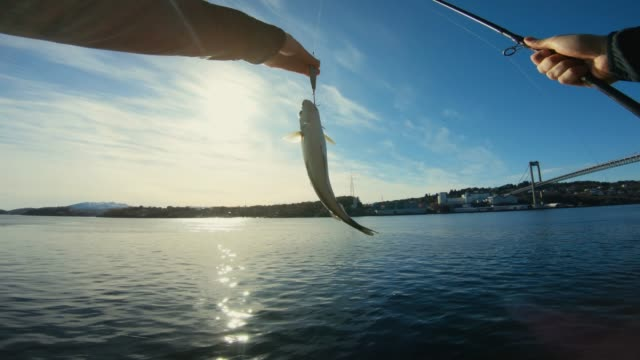 pov mann angeln im meer: einen fisch fangen - fang stock-videos und b-roll-filmmaterial