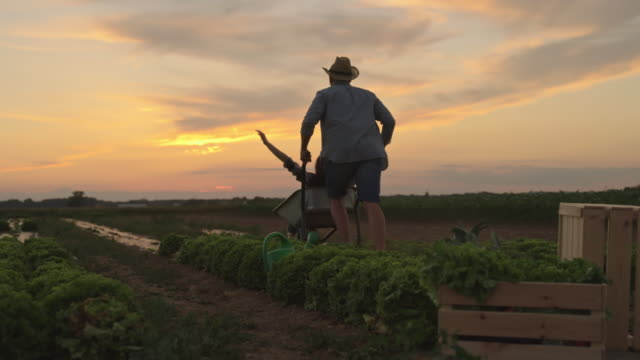 SLO MO Man giving a ride to a woman with a wheelbarrow in the field at sunset