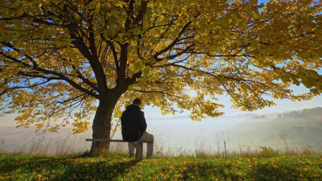 Man going to sit on a bench under the tree video