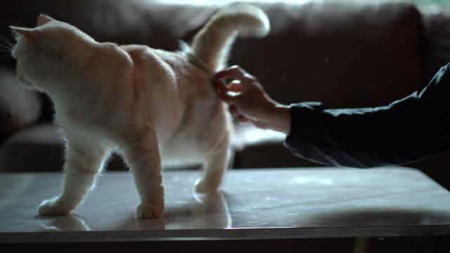 Man hand brushing cat hair