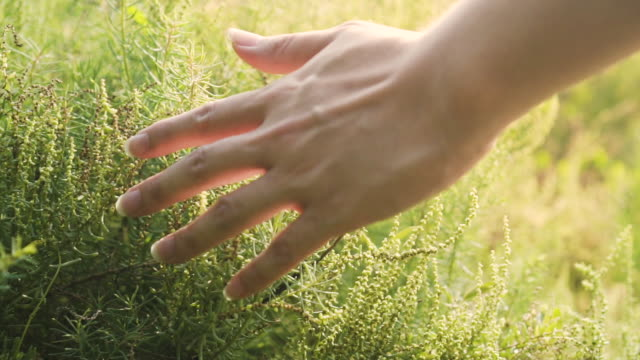 man hand touch some grasses with beautiful sunlight at background. slow motion. - lungo video stock e b–roll