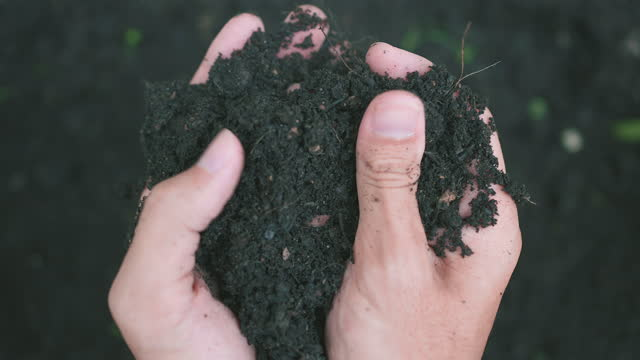 Man hands holding compost, organic soil, natural fertilizer, Agriculture and fertility concept Man hands holding compost, organic soil, natural fertilizer, Agriculture and fertility concept handful stock videos & royalty-free footage